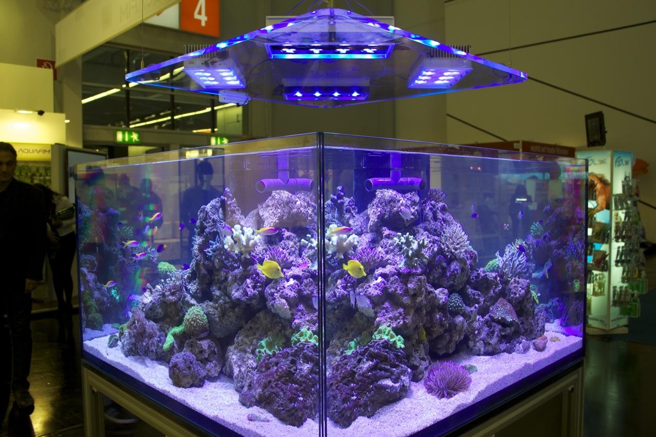 Interzoo 2012 d d aquarium solution deltec marinemad for Spacearium aquariums